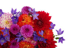 Flowers royalty free stock photo