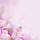 Flowers background, beautiful nature Stock Photos