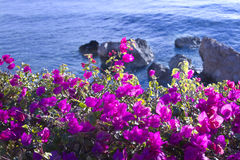 Flowers on a background of the blue sea Royalty Free Stock Images
