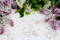 Flowers background. Bouquet of a branch of lilac spring flowers on a white wooden background. royalty free stock photography