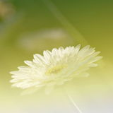 Flowers Background Bright Field Effect Royalty Free Stock Photography