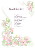 Flowers background. Floral greeting card decoration Royalty Free Stock Images
