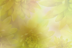 Flowers  background. Flowers yellow Chrysanthemums  on  blurred background.  floral collage. flowers composition. Stock Images