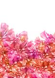 Flowers_background_isolated Royalty Free Stock Photos