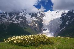 Flowers on a background of mountains Royalty Free Stock Photography