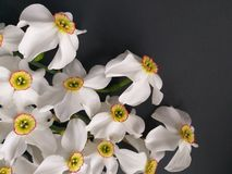 Flowers background spring stock photo