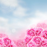 Flowers background, summer blossom Stock Photography