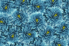Free Flowers  Background .Turquoise  Flowers Chrysanthemum. Close-up.  Floral Collage.  Flower Composition Royalty Free Stock Images - 91050349