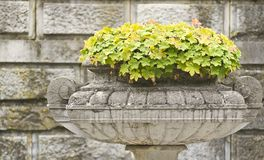 Flowers on the background wall. Stone bowl with flowers on the background wall Royalty Free Stock Photography