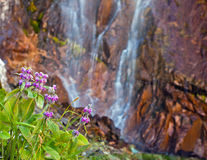 Flowers on the background of a waterfall. Royalty Free Stock Image