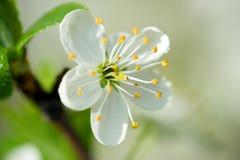 Flowers background Royalty Free Stock Image