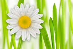 Flowers background, Stock Photo