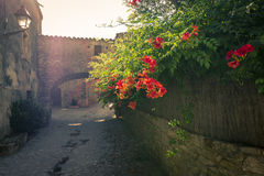 Flowers backlighted in old medieval town of Peratallada, Spain Royalty Free Stock Images