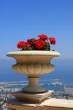 Flowers, Bahai gardens Royalty Free Stock Photo