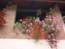 Flowers on balcony. A picture taken a few years ago in a beatiful home in italian countyard.Beautiful flowers and tipycal italian bricks hand made Royalty Free Stock Photos
