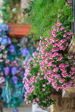 Flowers on the balcony. Colorful Flowers on the balcony Stock Photography