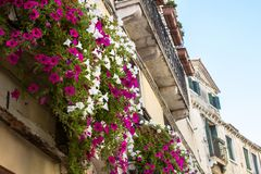 Flowers on balcony Stock Photos