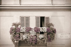 Flowers on a balcony. Piazza Navona, Rome, Italy Royalty Free Stock Images