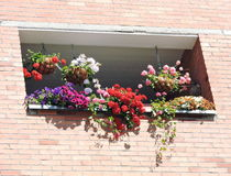 Flowers in balcony Royalty Free Stock Images