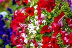 Flowers at a balcony Stock Photography