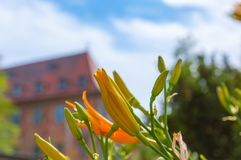 Flowers in Bamberg, Germany. Image of flowers  on the City hall  in Bamberg, Germany Royalty Free Stock Photography