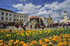 Flowers  at Banska Bystrica. Yellow flowers at Namestie SNP square at Banska Bystrica, with the Clock tower and fountain Stock Photos