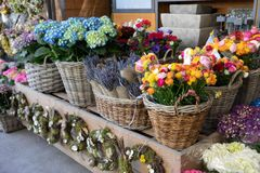 Flowers bar with variety of fresh beautiful flowers such as persian buttercups, anemone coronaria, lavender, hydrangea stock images