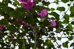 Flowers and Barb Wire, Gisenyi, Rwanda Stock Photo
