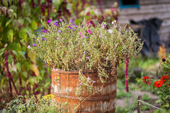 Flowers in a barrel stock photos
