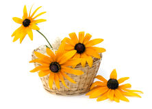 Flowers in a basket. Yellow flowers in a basket on a white background Royalty Free Stock Images