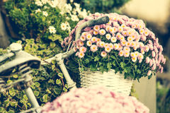 Flowers in a basket on a bicycle Stock Photo