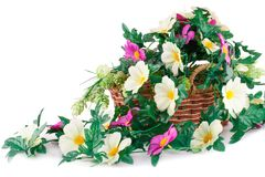 Flowers in basket. Colorful fabric flowers in wicker basket isolated on white background Royalty Free Stock Images