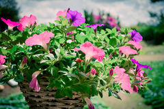 Flowers basket Stock Photos