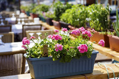 Flowers basket hanging Royalty Free Stock Images