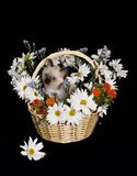 Flowers basket isolated w/cat Stock Photos