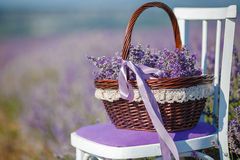 Flowers basket on the lavender field Royalty Free Stock Image