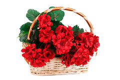 Flowers in basket Royalty Free Stock Photo