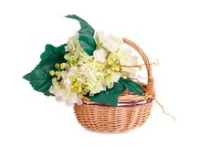Flowers in basket. White fabric flowers in wicker basket isolated on white background Royalty Free Stock Photography