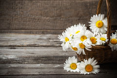 Flowers in basket on wooden background Royalty Free Stock Image