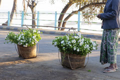 Flowers in Baskets. Beautiful white flowers being sold to local shops in handmade baskets in Katha, Myanmar Royalty Free Stock Photography