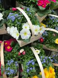 Flowers in baskets. Pile of wooden baskets with garden flowers of different colors, close-up full frame image Stock Photography