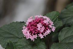 Flower in Batu Caves in Kuala Lumpur Stock Images