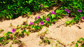Flowers on a Beach Stock Photography