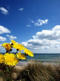 Flowers on the beach. Yellow flowers on the beach under cloudy sky Royalty Free Stock Photo
