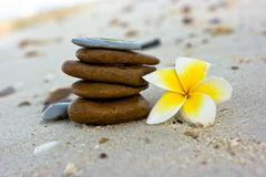 Flowers on the beach. Temple tree flowers lying on the beach Stock Photography