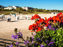 Flowers on the beach. Of Ahlbeck (Germany Royalty Free Stock Photos