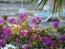Flowers on the beach background. Flowers on the beach of the Aegean sea in Turkey Stock Images