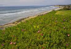 Flowers and Beach, California Coast Royalty Free Stock Photo