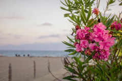Flowers on the beach. Delicate flowers on the beach Stock Photography