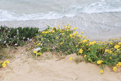 Flowers at the beach. In Israel Royalty Free Stock Image